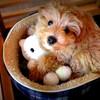 子犬の生後4カ月までに用意・準備したことのすべて|何が必要だったかを記載してみます