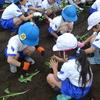 1,2年生 芋の苗植え