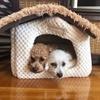 種を超えた愛情は存在するのか?イヌとネコ