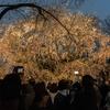 「桜の森の満開の下」の狂気はどこ?もはや陽気。