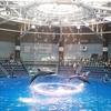 【番外編】この連休にオススメの都内の水族館はしごプランをご紹介!
