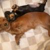 獣姦もののAVは、犬等に対してへの虐待とみなされ、動物愛護法違反になったりしないのか?