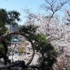 東京の桜の名所のひとつ「上野公園」へ 春を感じる