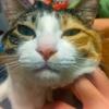 【愛猫日記】毎日アンヌさん#183