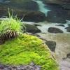 【鹿児島県おすすめ観光スポット】雄川の滝に行ってみた!