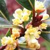 庭の果樹の花