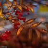 4日間で秋深まる