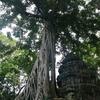 majokoと魔法の旅ブログ★カンボジアの旅 Chapter 9: majokoのインスタ映え対決! in タ・プローム遺跡 -シェムリアップ2日目