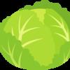 【野菜の保存】キャベツの栄養と保存