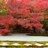 【京都市左京区】秋のおすすめ!南禅寺の天授庵「そうだ 京都、行こう。」で紹介された、紅葉のお庭を見にいこう!