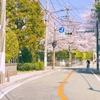 横浜の汐汲坂交差点の桜