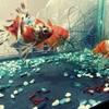 【閲覧注意!】愛する魚たちに活き赤虫をプレゼント!