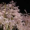 夜の京都は幻想的でどこか寂しげ