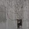 2月12日 市川市で猫さま歩き とその情景