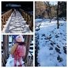 1月①雪の森
