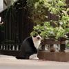 11月6日 新宿から護国寺までの猫さま歩き とその情景