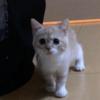 かわいい子猫が家族になりました