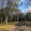 今日の公園( ´ ▽ ` )ノ