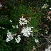 4月の庭 2019/芽吹き 小さな蕾と花と。