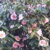 如月、寒さの中にも春がだんだんやってくる季節。