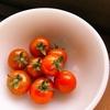 パッケージレスミニトマト