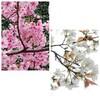 【桜】目で、肌で、春を感じる毎日
