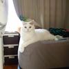 【39本目】猫を飼い始める時に必要なモノ