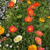 今日のポエム 「花」