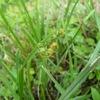 晩夏のワラビ(蕨)