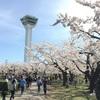 お花見in函館