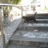上下する猫