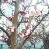 春 の 予感 ☆