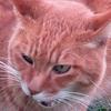 猫の集会 「家飲み」サスペンス劇場