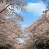 花見ライドからの夜桜