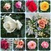庭の花と三春の福聚寺