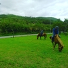 馬から学ぶこと③