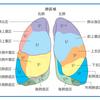 肺区域の簡単な覚え方