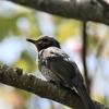 【野鳥】No.10 新潟 春の野鳥