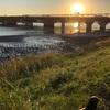 本日のライド 江戸川起点まで往復舞浜経由帰宅142km