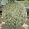 メロンの栽培