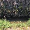 田んぼ横の小川で小物釣り^^昔はフナが多かった気がするのですが・・・