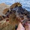 釣場から根魚が消える日も近い?