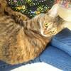 【猫の体重】エリンギさんがぽっちゃりなのか、シメジさんが痩せているのかよくわからない件。