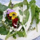 貸し切り利用OK!北仙台の英国風貸農園  庭園農園のブログ
