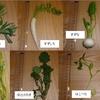 春の七草がゆ 生野菜とフリーズドライを食べ比べてみた!