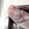 珍魚ヨロイイタチウオのグリル