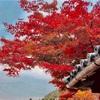 安芸の宮島と紅葉