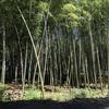【制作】竹の楽器をつくる(1)事前のリサーチ