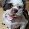 大平森林公園オープニングイベントで犬の譲渡会をします!