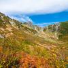 【RAW現像・画像編集】紅葉の季節、彩度の上げすぎに御用心!